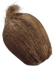 Artificial Coconut