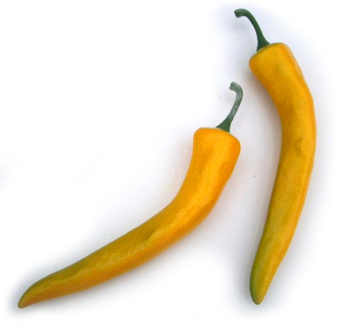 Large Yellow Chili Pepper