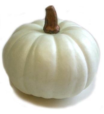 "6"" White Pumpkins"