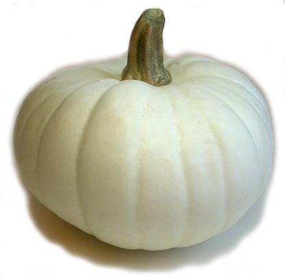 "7"" White Pumpkin"
