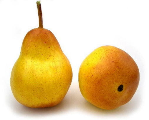 Artificial Yellow/Blush Pear(Life Size)