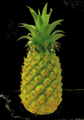 "Pineapple 10""  Green/Natural"