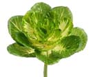 Artificial Flowering Cabbage